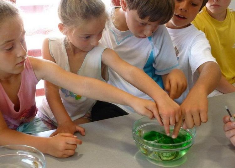 Expériences scientifiques sur le sel du marais à Marennes