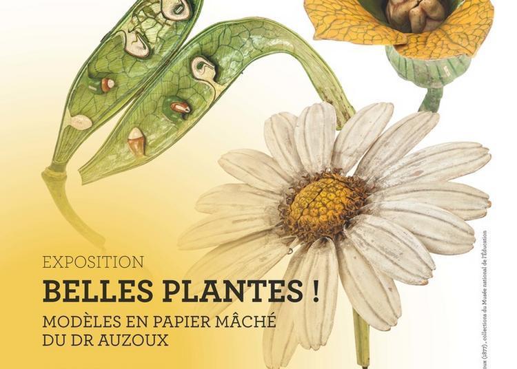 Exposition  Belles Plantes ! Les Modèle En Papier Mâché Du Dr Auzoux à Rouen