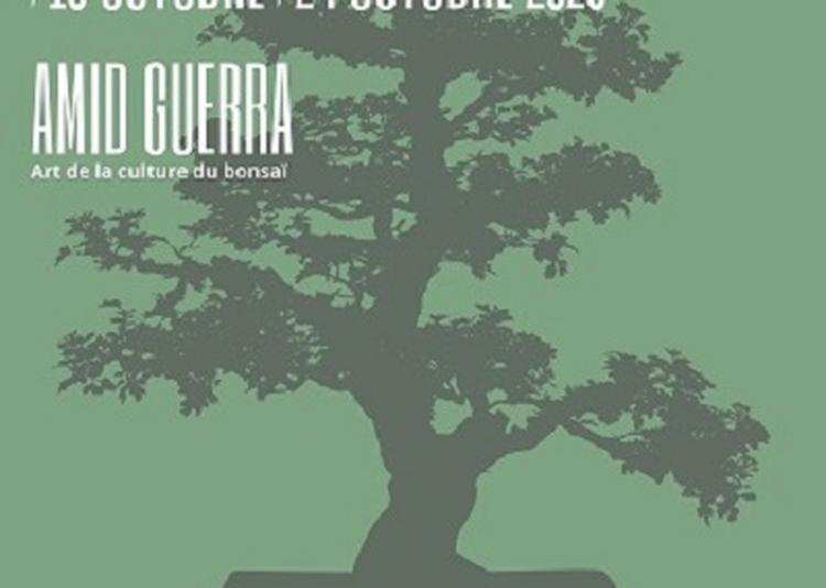 Exposition bonsaï - L'arbre aux 40 écus à Saint Vit