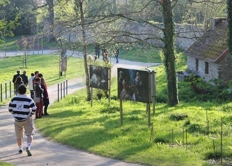 Exposition Chasseurs De Miel Photographies D'éric Valli Dans Les Jardins De L'abbaye à Daoulas
