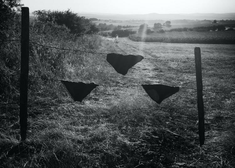 Exposition De Marine, Julie & Delphine Oger / Sculpture, Photographie, Vidéo à Angers