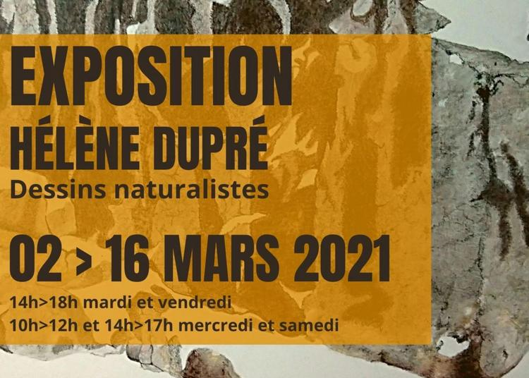 Exposition dessins naturalistes à Saint Vit