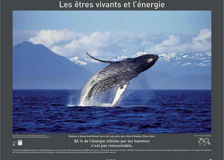 Exposition : Énergie De Yann Arthus-bertrand à Caen