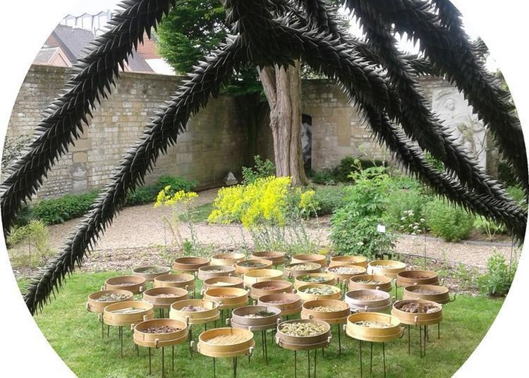 Exposition Herbier Chromatique De Pascal Levaillant à Rouen