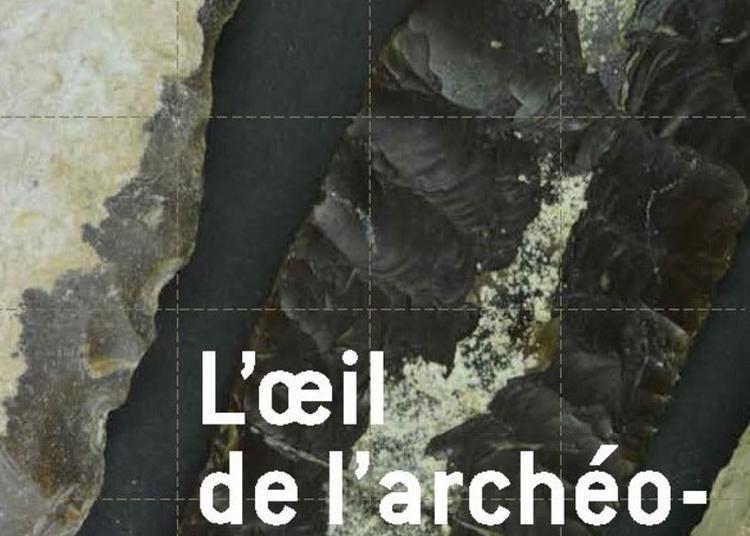 Exposition L'oeil De L'archéologue à Viols en Laval