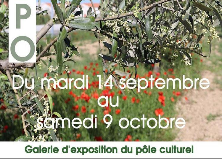 Exposition : L'olivier à Chateauneuf les Martigues