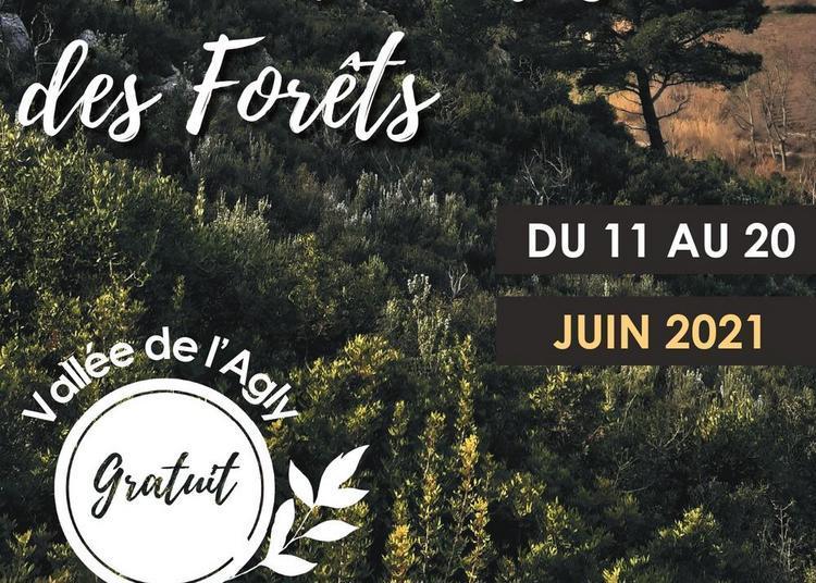 La Forêt - GoodPlanet à Maury