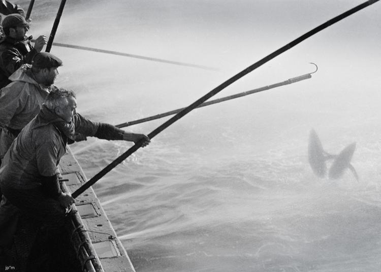 Exposition La Pêche Au Thon à L'appât Vivant - Jean-paul Mathelier. à Plobannalec Lesconil