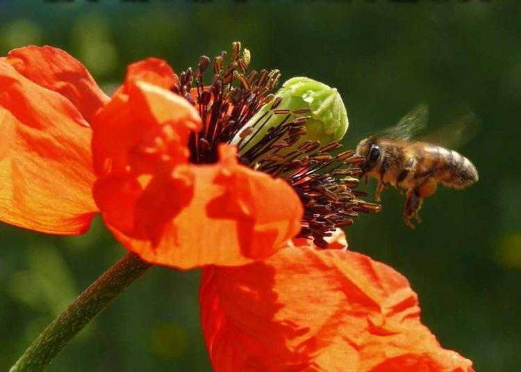 Exposition « L'abeille, Le Pollen Et L'apiculteur » à Villard de Lans