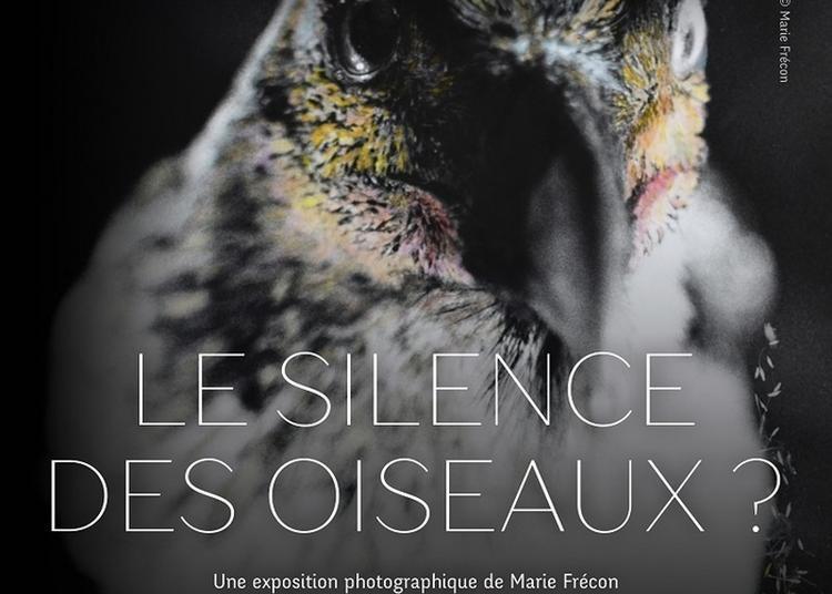 Exposition Le Silence Des Oiseaux ? à Toulouse