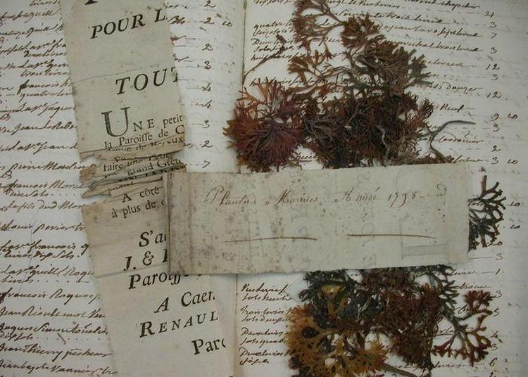 Exposition : Les Herbiers De L'université De Caen Normandie