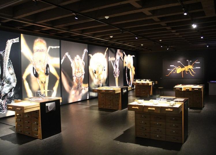 Exposition Mille Milliards De Fourmis à Bethoncourt