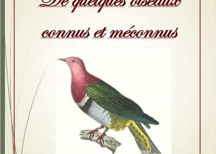Exposition numérique / De quelques oiseaux connus et méconnus à Abbeville
