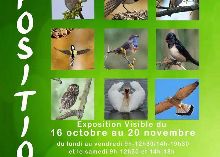 Oiseaux de la Cité de Gayant à Douai