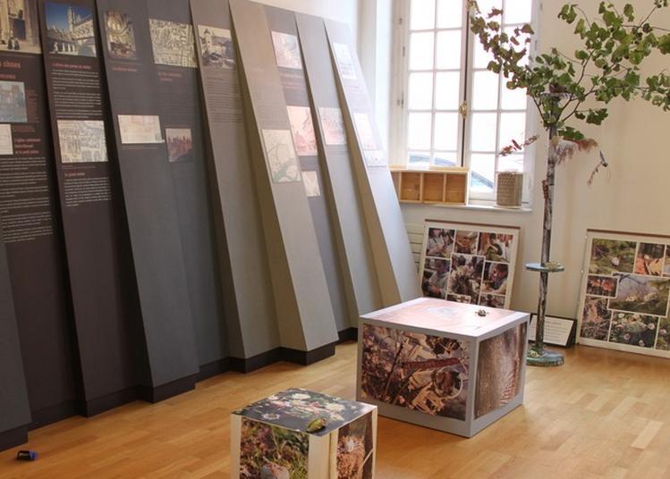 Exposition Permanente De L'espace Patrimoine : Fragments D'histoire à Chalon sur Saone