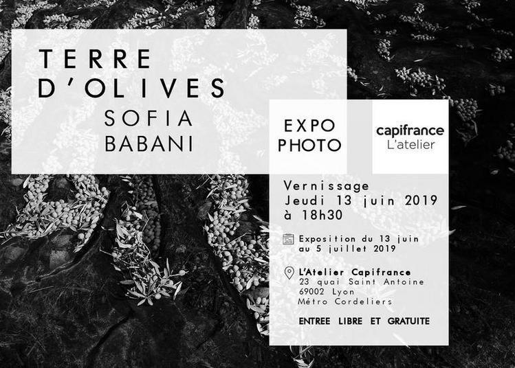 Vernissage expo photo Terre d'Olives à Lyon