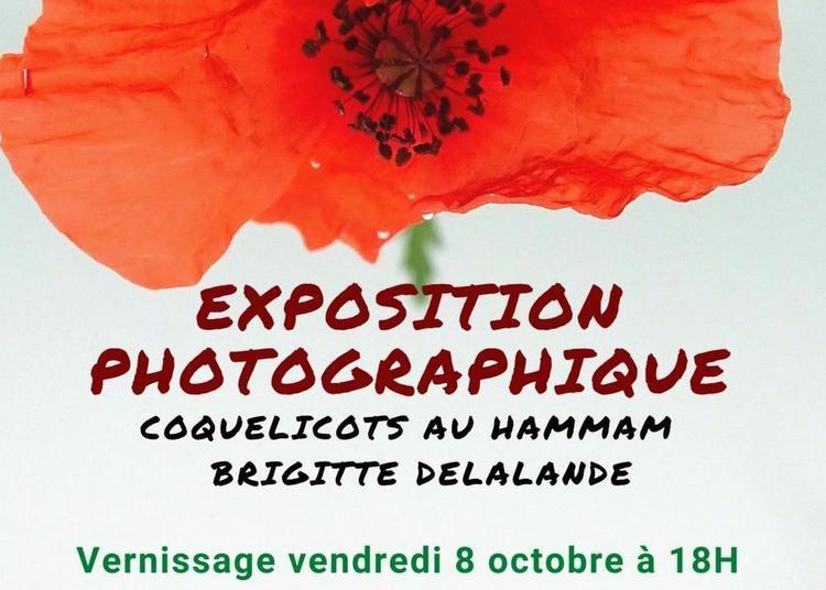 Exposition photographique : Coquelicots au Hammam à Rennes