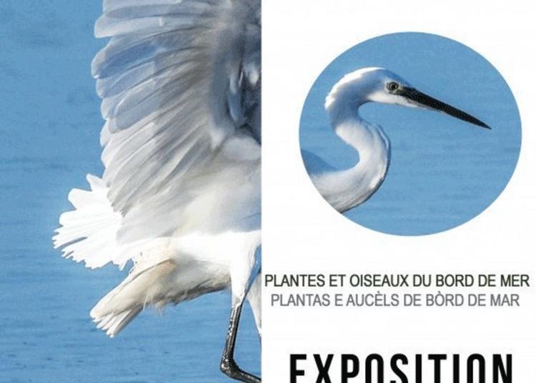 Exposition Plantes Et Oiseaux De Bord De Mer à Gruissan