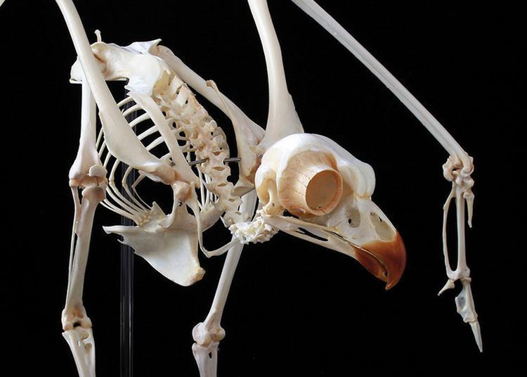 Exposition Squelettes à Perpignan