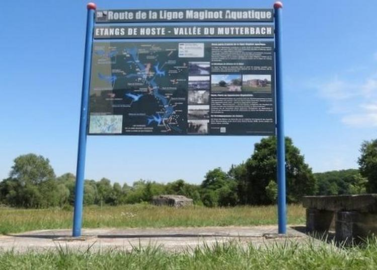 Exposition Sur La Ligne Maginot Aquatique : Découverte D'un Système Unique De Siphons à Hoste
