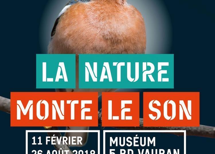 Exposition Temporaire La Nature Monte Le Son à Auxerre