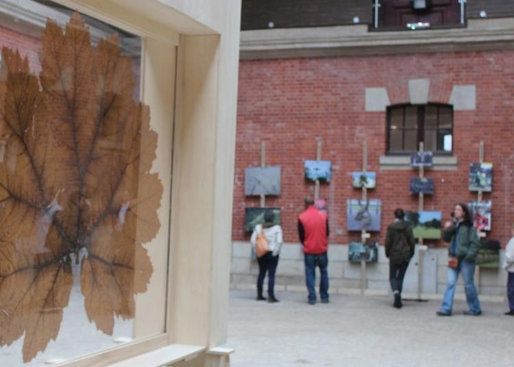 Exposition : Toujours La Vie Invente, Carte Blanche À Gilles Clément à Saint Goazec