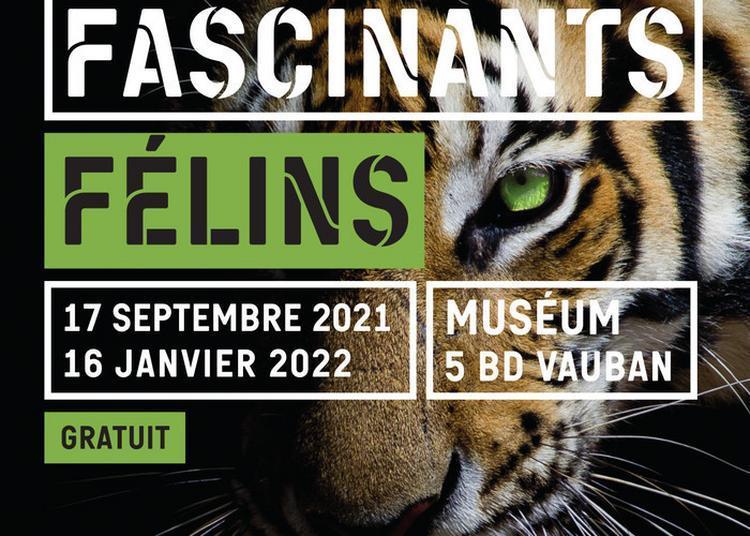 Fascinants Félins à Auxerre
