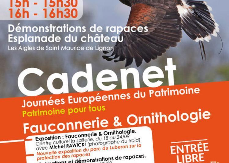 Fauconnerie Et Ornithologie à Cadenet