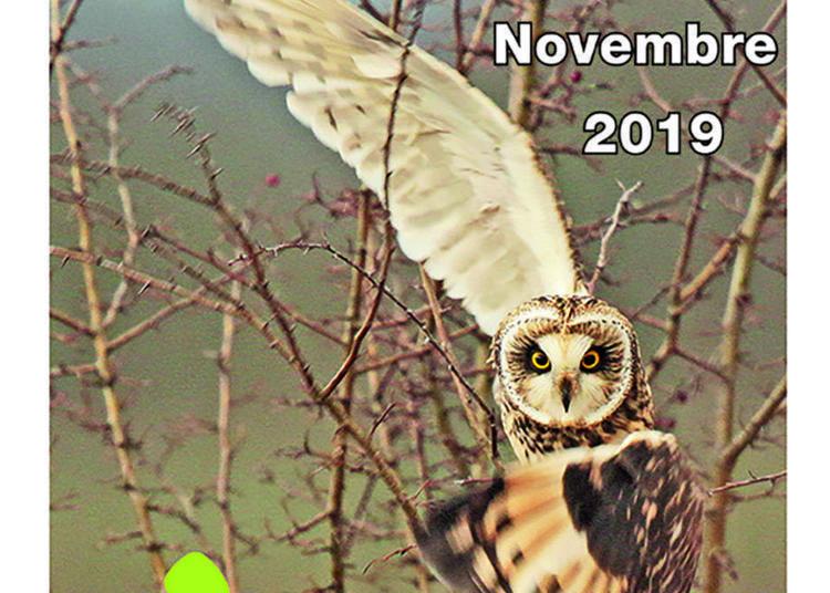 Festival de photographie animalière de Brasparts 2019
