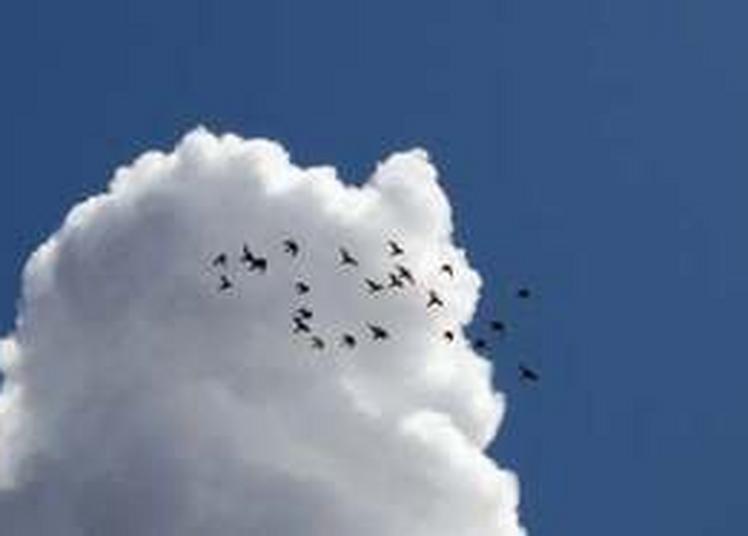 Fête Des Pigeons Voyageurs Et Des Pigeonniers à Rieumes