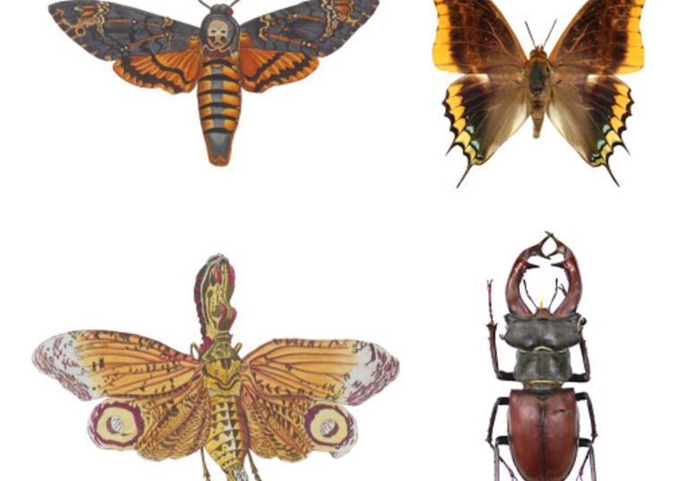 Histoires D'insectes à Lyon