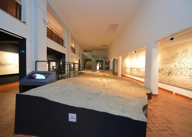 Hommes Premiers, Matières Premières : Visite Thématique Histoire De Fossiles à Nice