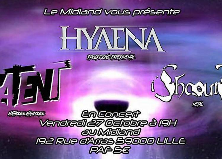 Hyaena / Patent / Shaours à Lille