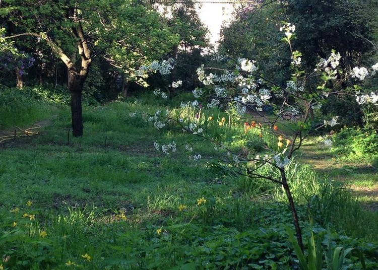 Jardin De La Reine à Montpellier