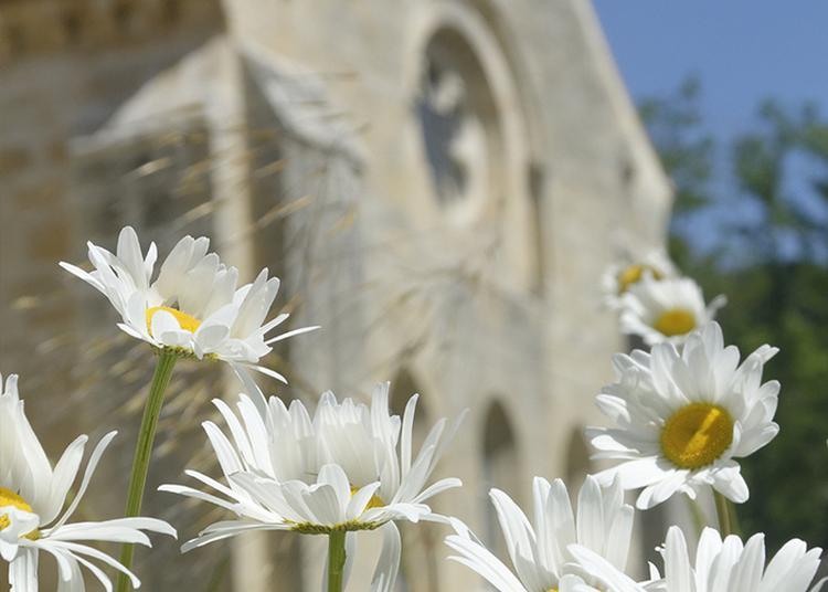 Journal Sonore D'un Jardin : Raconter Un Jardin, Un Environnement Naturel Par Le Biais Du Son à Bruere Allichamps