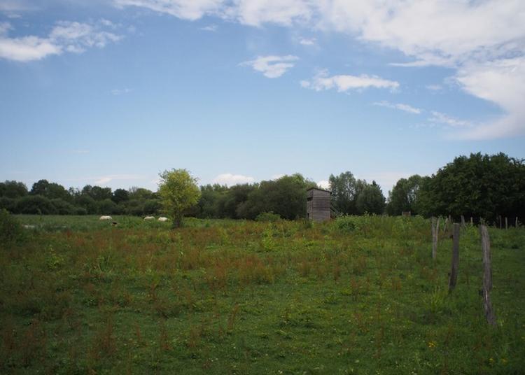L'automne Aux Prairies à Deols