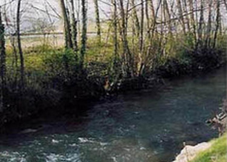 L'eau, Patrimoine Naturel : Une Balade À Vélo Le Long De La Bourbre à Bourgoin Jallieu