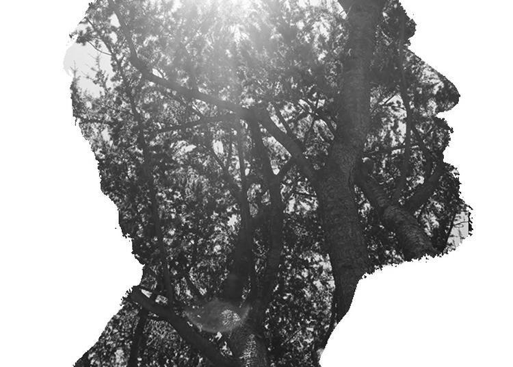 L'homme qui plantait des arbres à Lyon