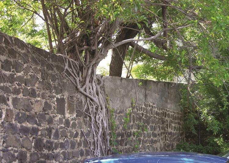 L'inventaire Des Arbres Remarquables À La Réunion à Saint Pierre