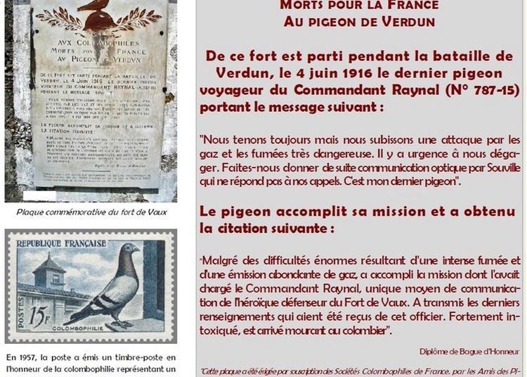 L'utilisation Des Pigeons Voyageurs Comme Agents De Liaison Pendant La Grande Guerre à Toulouse