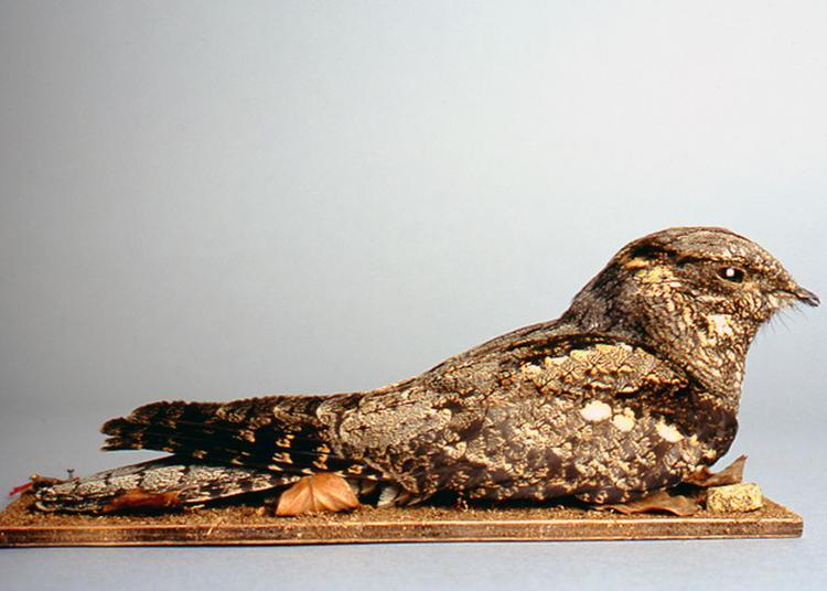 La Classe, L'oeuvre ! : Frissons Au Muséum à Auxerre