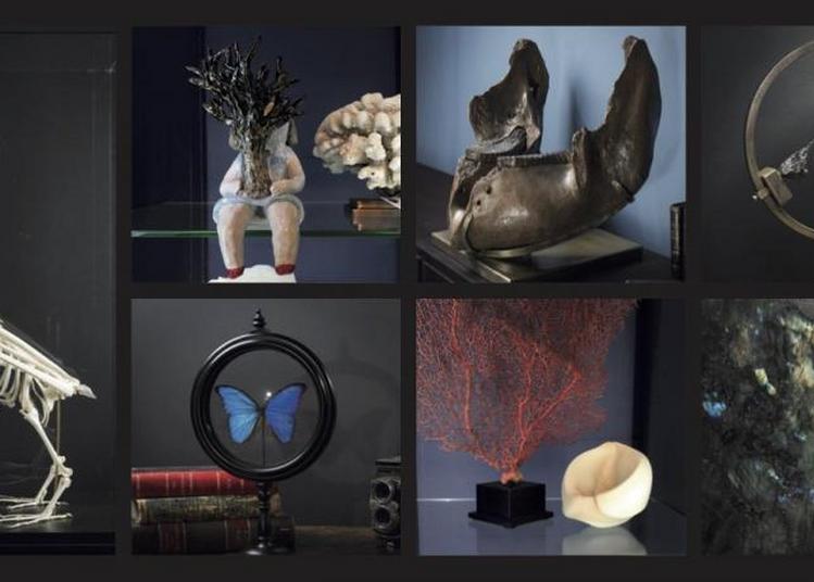 La Galerie des Merveilles à Lyon
