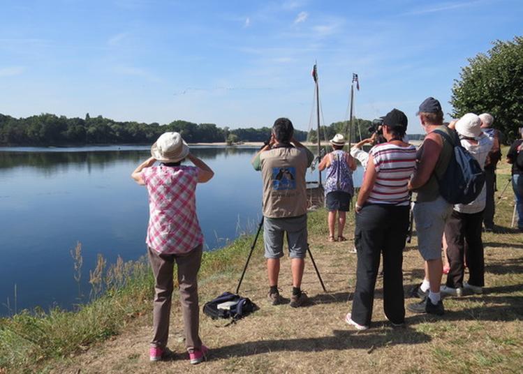 La Loire En Automne à La Ville aux Dames