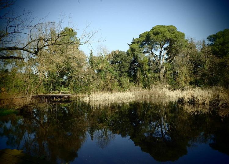 La Mare De Grammont, Du Sanctuaire Botanique À La Mare Écologique à Montpellier