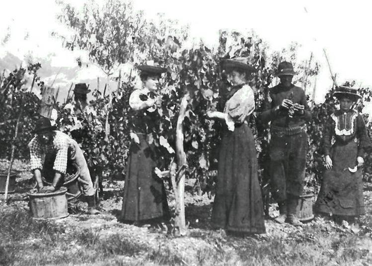 La Vigne Dans Notre Village À Travers Les Âges à Saint Nazaire les Eymes