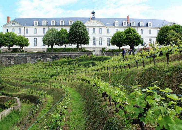 La Vigne Du Clos Saint-nicolas à Angers