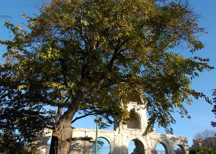 La Ville D'arles : D'arbres En Arbres à Arles