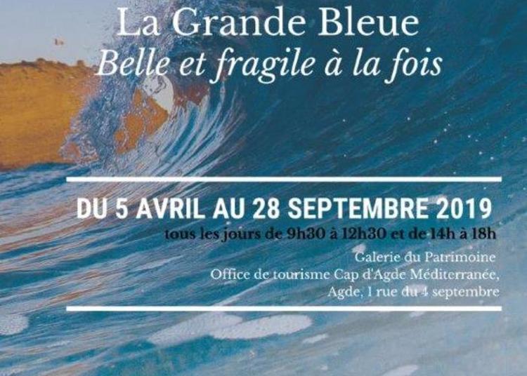 « La Grande Bleue » - Belle Et Fragile à La Fois à Agde