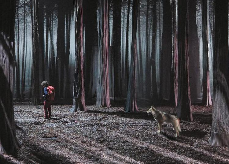 Le Bruit des Loups | Invasion ! Etienne Saglio à Marseille