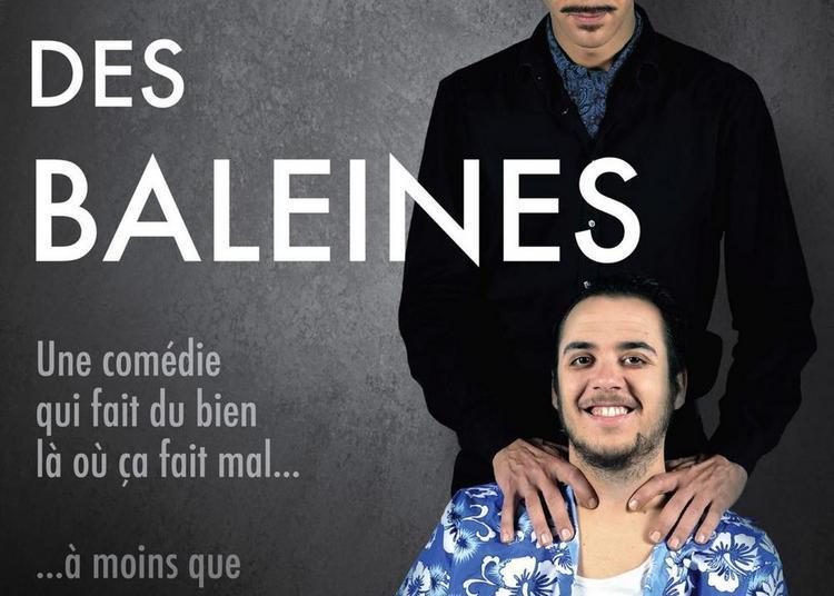 Le Chant Des Baleines à Lyon